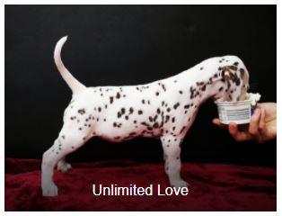 Frau Braun Somora´s Unlimited Love...6 Wochen alt
