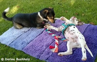 Nobbe und Jun. Spiel mit mir. September 2014
