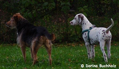 Perro und Jun, Oktober 2014