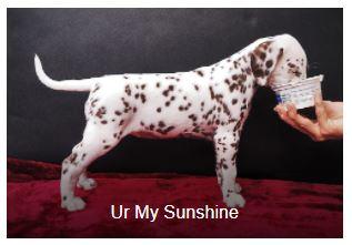 Frau Pink Somora´s Ur My Sunshine...6 Wochen alt