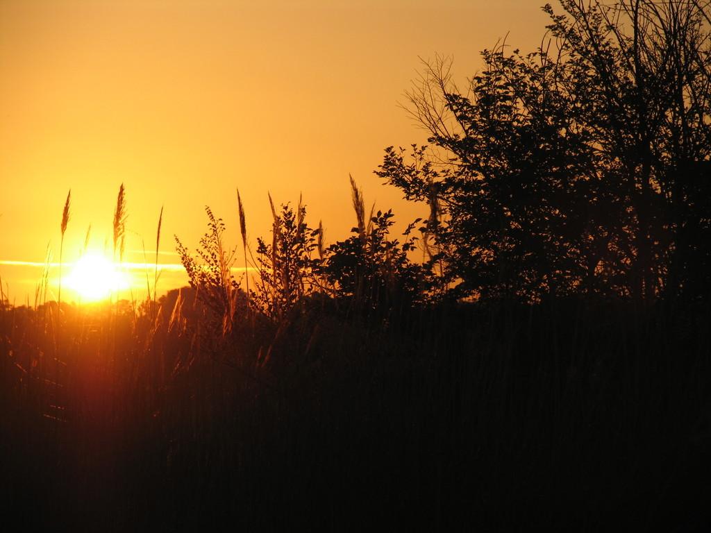 Morgenstimmung in den Feldern