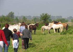 Pferde auf der Weide holen