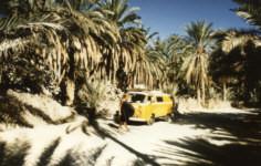 Oase Nefta, Tunesien