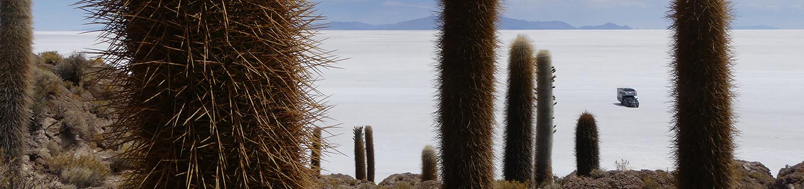 Isla Incahuasi, Salar de Uyuni, Boöivien