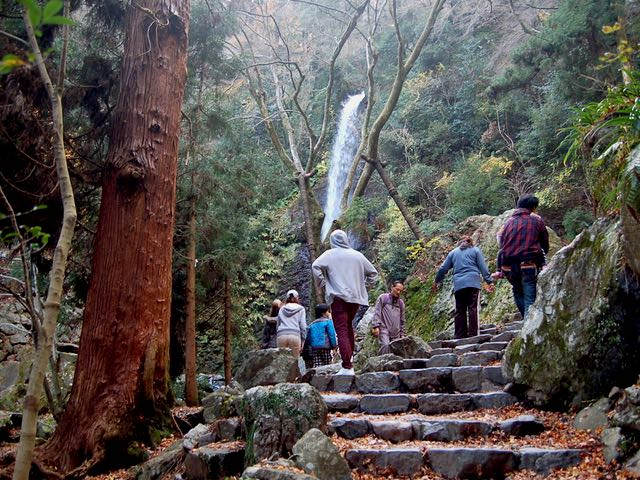 フウフウ言いながら歩いて、養老の滝に到着
