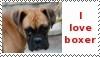 stamp boxer 1