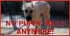 stamp puppy mills 2