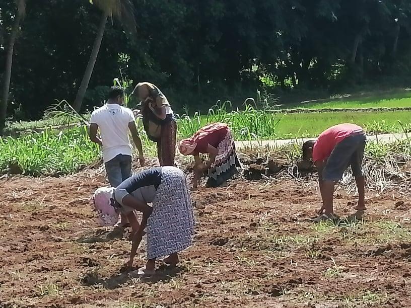 共同畑をつくり、野菜づくりを始めた住民も