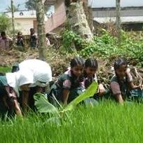 コーディネーターが日本で学んだ田んぼの草取りの方法を子どもたちにも教えています