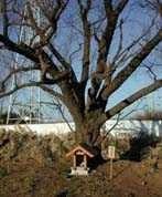 江戸見桜2001年元旦
