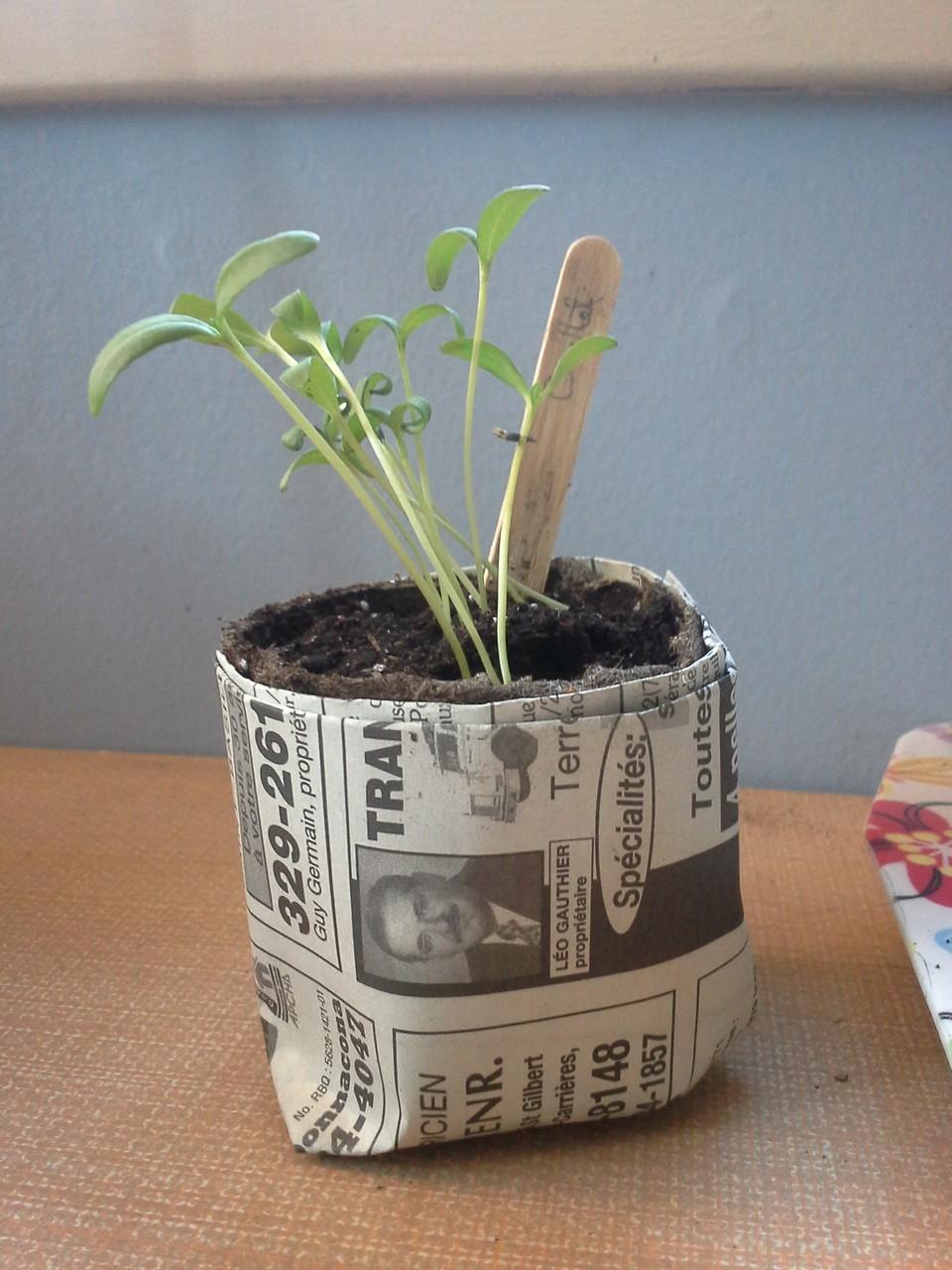 Semis pour l'activité Jardins & Découvertes