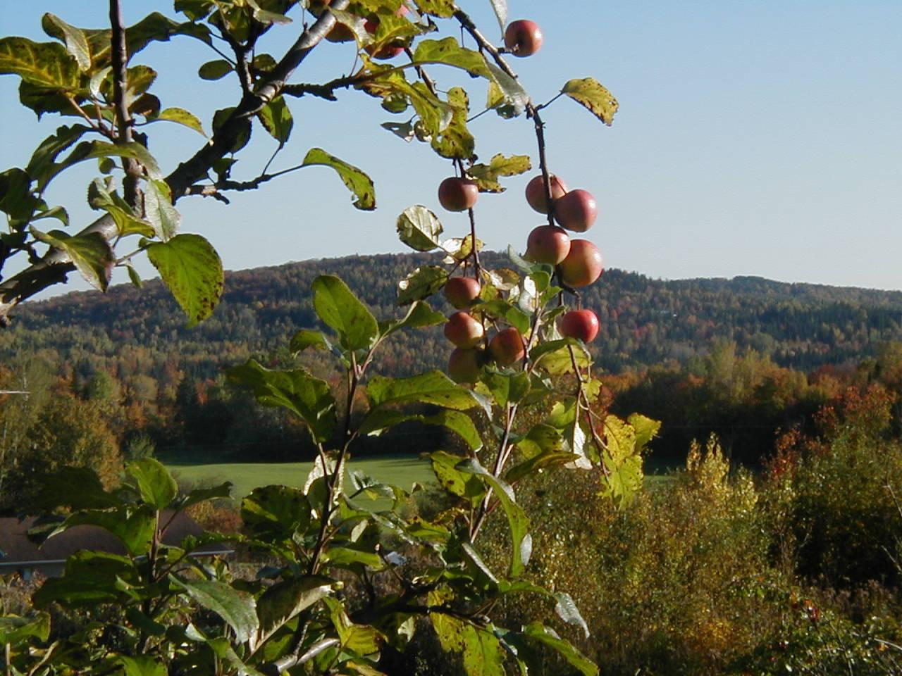 Plantation, taille et traitement des fruitiers