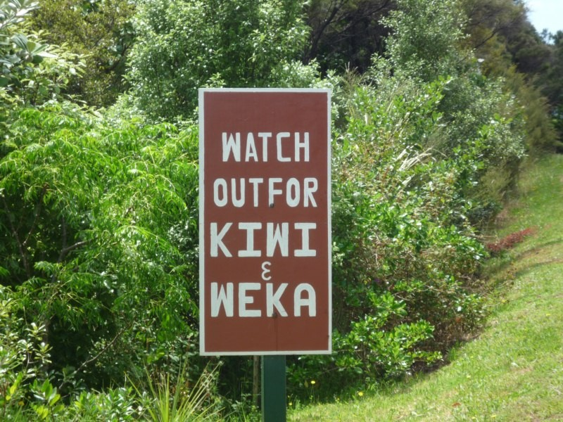Alerta, más animalitos por la zona