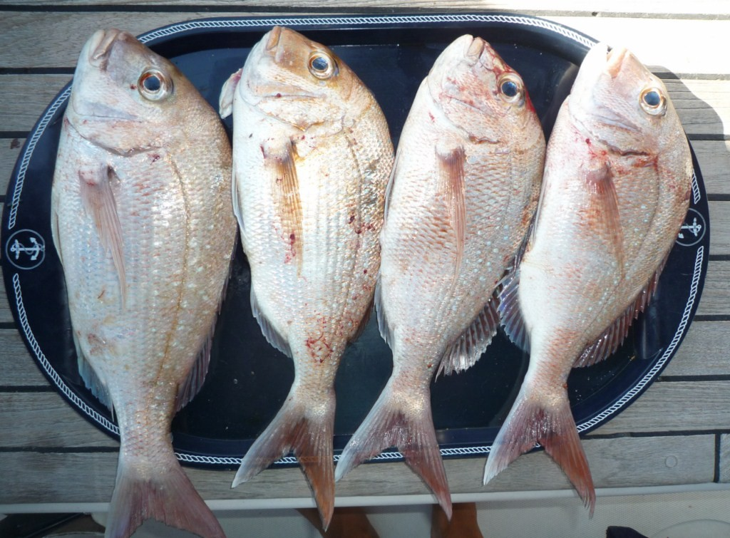 La pesca en la mejillonera es segura