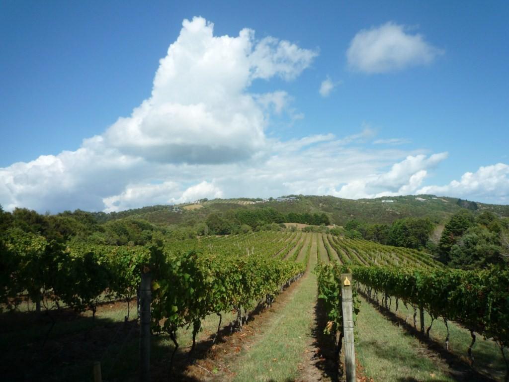 Trekking que pasa por los viñedos