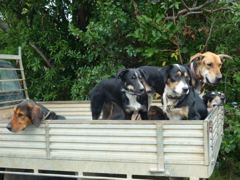 7 perritos tiene su dueño