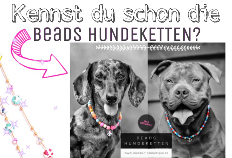 www.jokers-tierboutique.de beads hundeketten anhänger hundeschmuck joker's onlineshop Hundeketten original hundeladen emsland