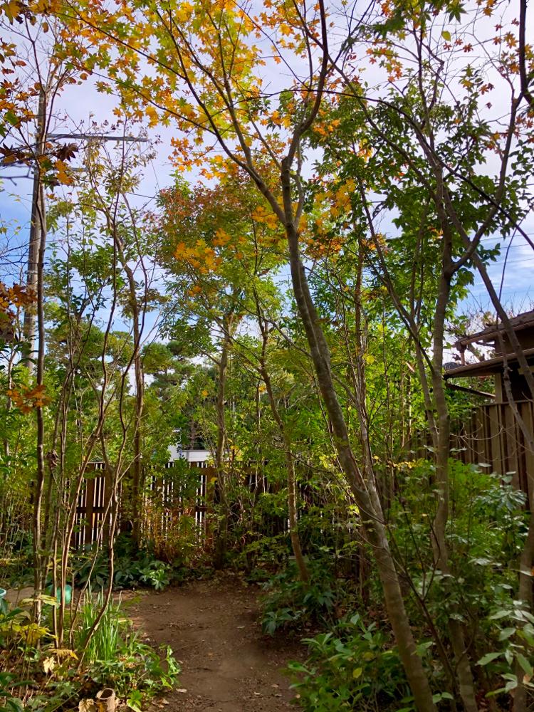 鎌倉市 雑木の庭