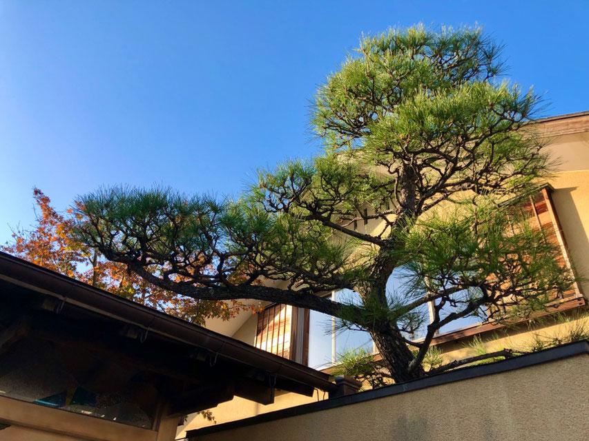 松 和の庭