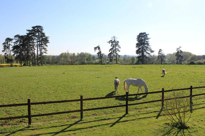 Herbages des chevaux