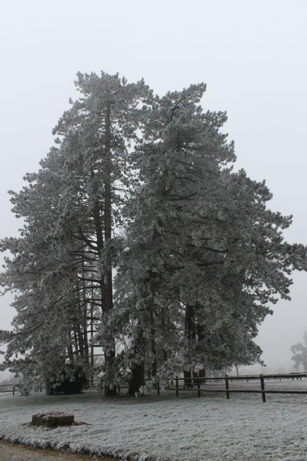 Autre vue en hiver - Gîte