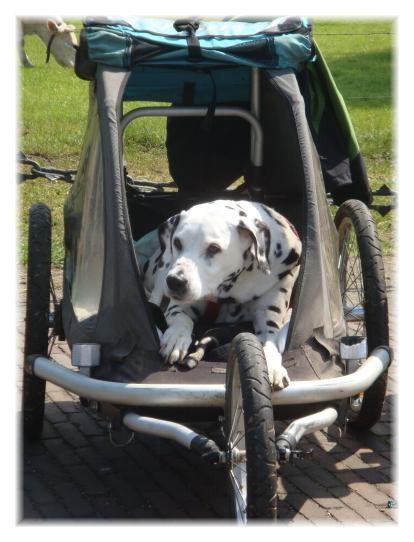 Niña im Hunde-Senioren-Taxi.