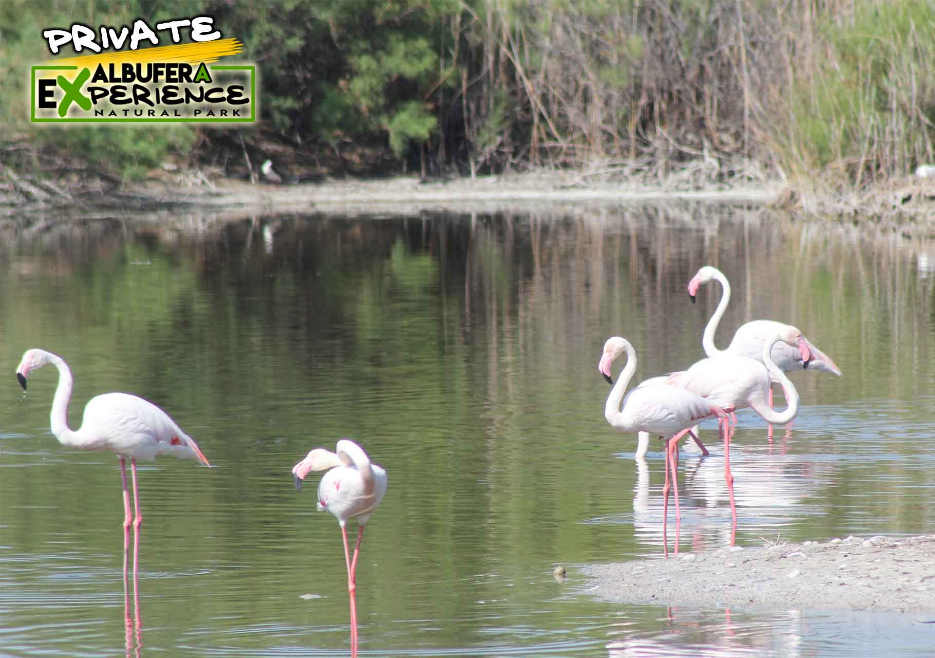 Visit Albufera Park in a private tour