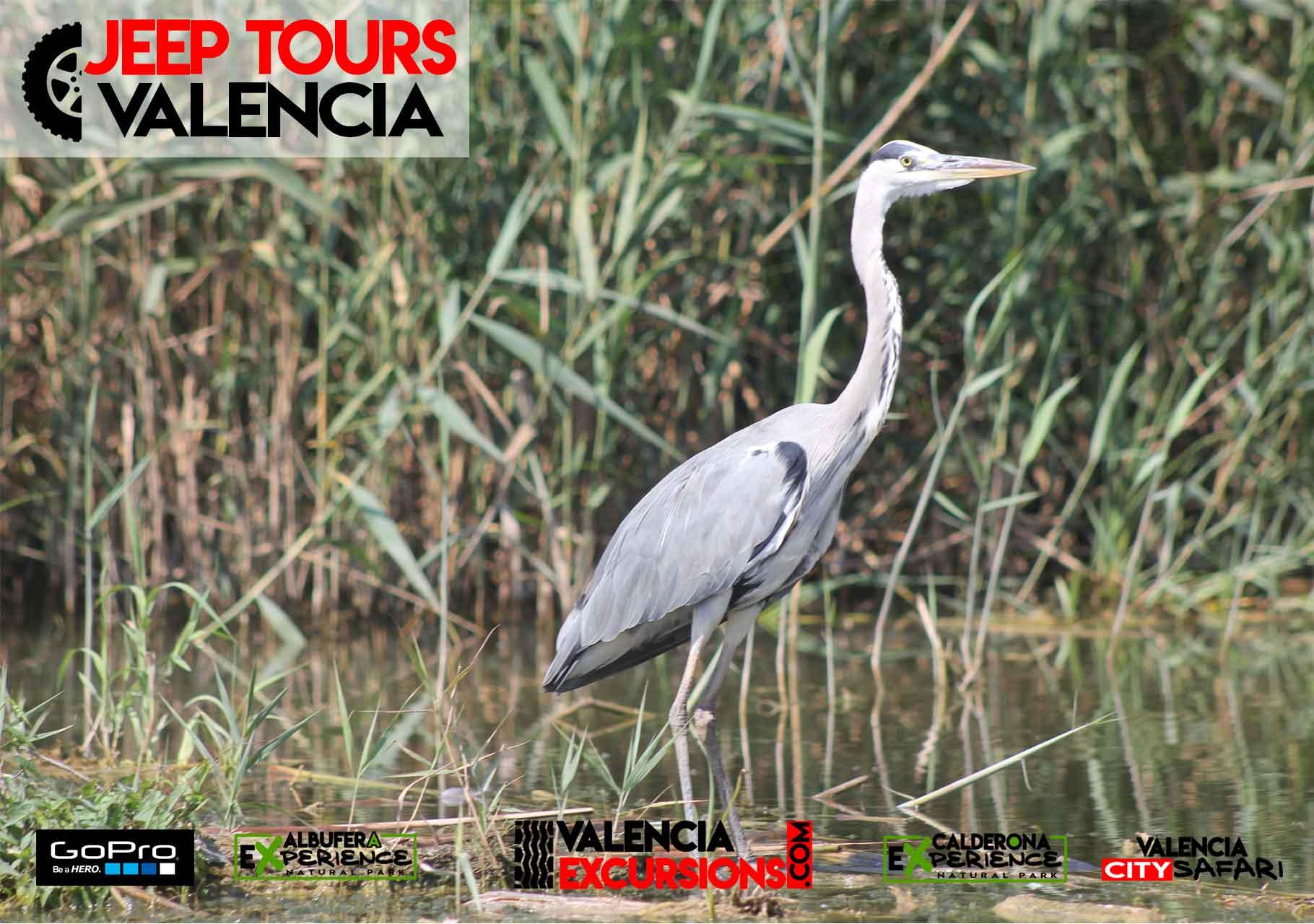 Natur und Tierwelt von Valencia im Albufera  Park