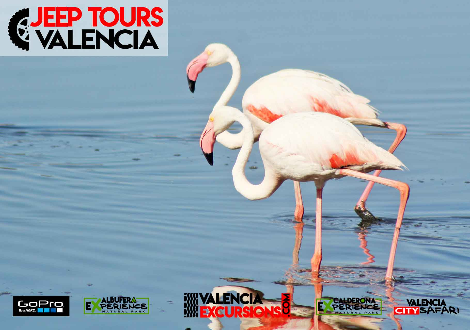 Flamencos in Albufera National Park during Albufera EXperience Jeep Tour Valencia