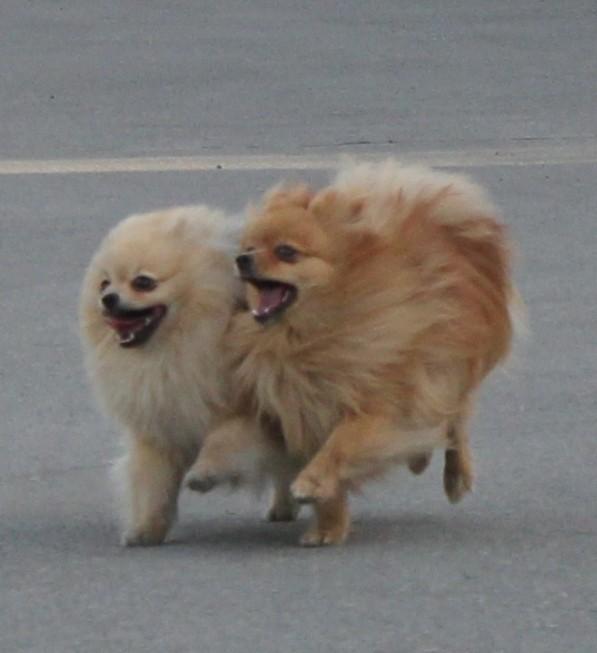 Даша и Вилли