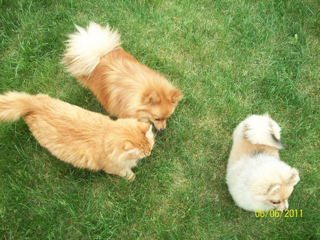 Рыжик , Вилли и Даша