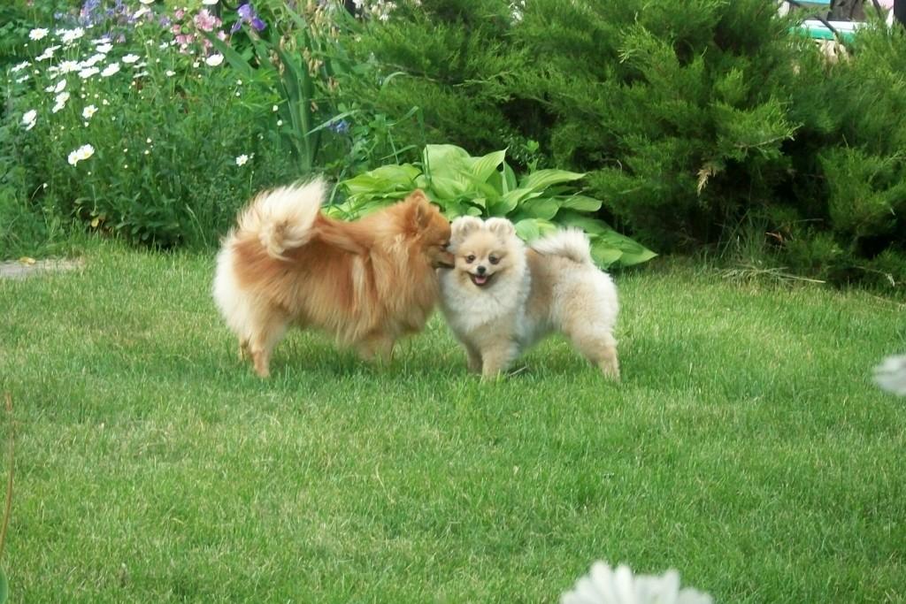 Вилли и Даша