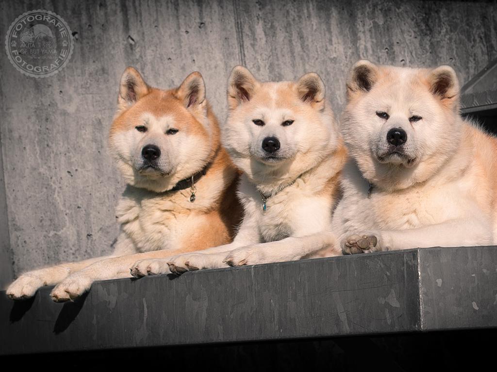 Kuma & Ginji & Sayuri