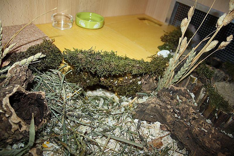 Der untere Eingang vom fast vergrabenen Mehrkammernhäuschen!