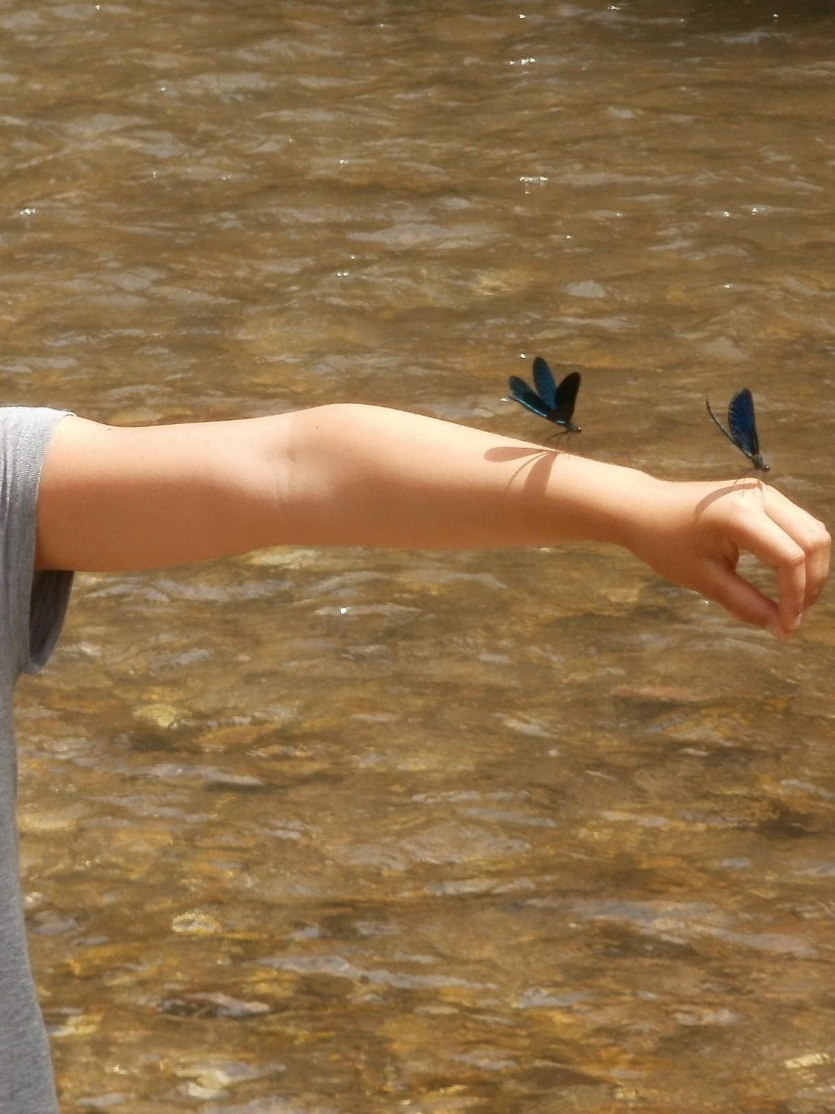 Les libellules bleues nous accueillent