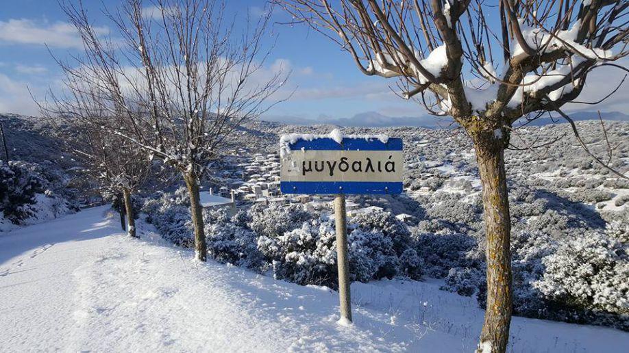 Amygdalia sous la neige
