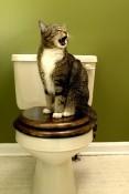 Spezialist für Harnwegsinfektion von Katzen