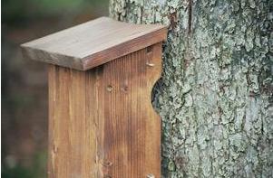 Baumläuferkasten