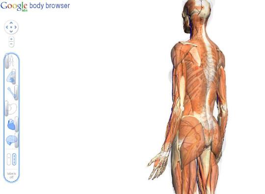 google body bowser