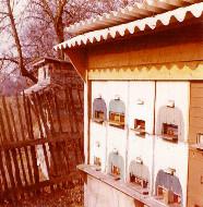 Bienenhaus 1972