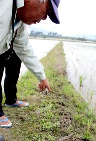 上地国博さんの畑に残されたカピバラの足跡=10日午後、名蔵大田原