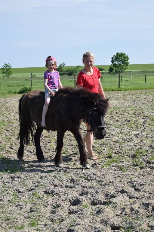 Pony führen auf dem Ferienhof Jacobs nahe St. Peter Ording