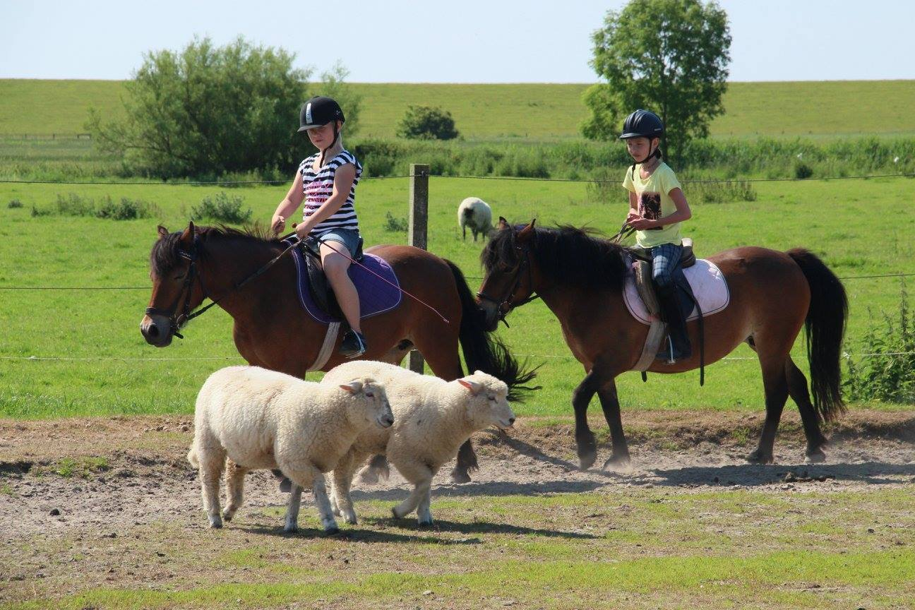 Ponyreiten auf dem Ferienhof Jacobs nahe St. Peter Ording