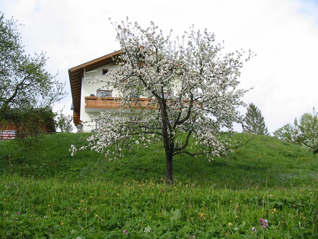 Biohof Haus Wieser, Abtenau, Salzburg Land, Apfelblüte
