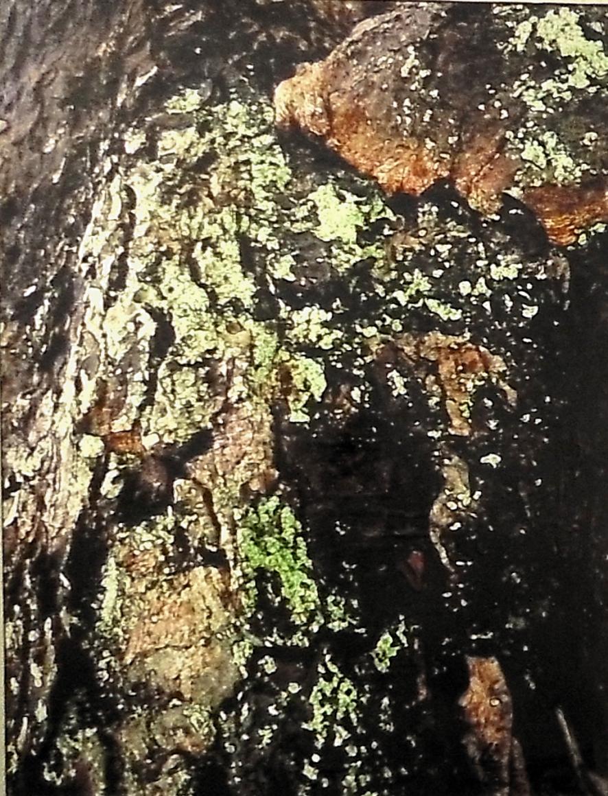 Jutta Leitner: LIVING TREES I FINE-Art GalleryPrint montiert auf Holz 60 x 80 cm 2020