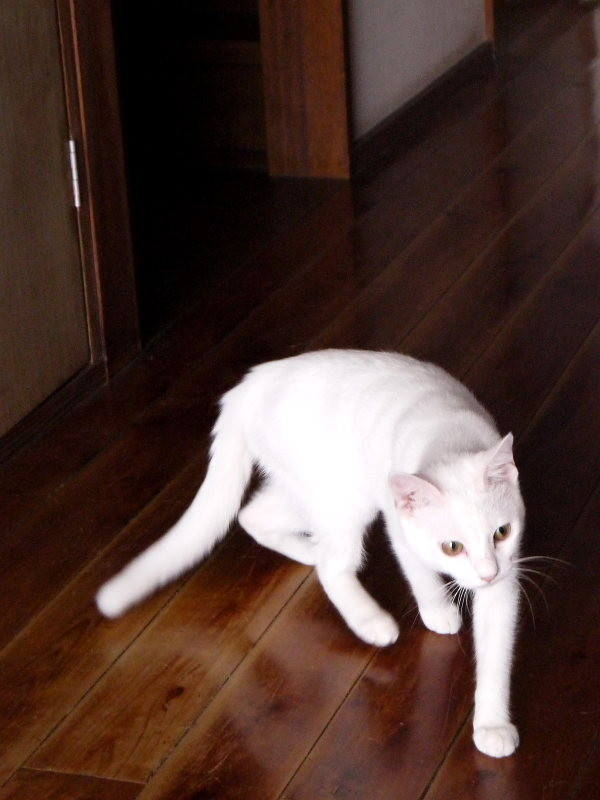 1階の廊下をうろついているフクちゃん。