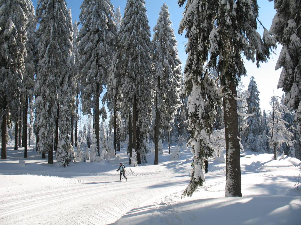 Bretterschachten, Bayerwald