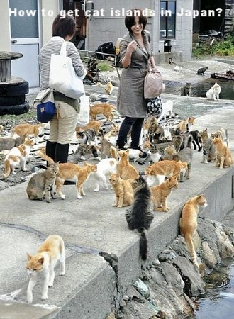 Cat island, Aoshima, Ehime, Japan