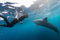 toshima island tokyo You can meet cute dolphins Source: Tokyo Convention & Visitors Bureau
