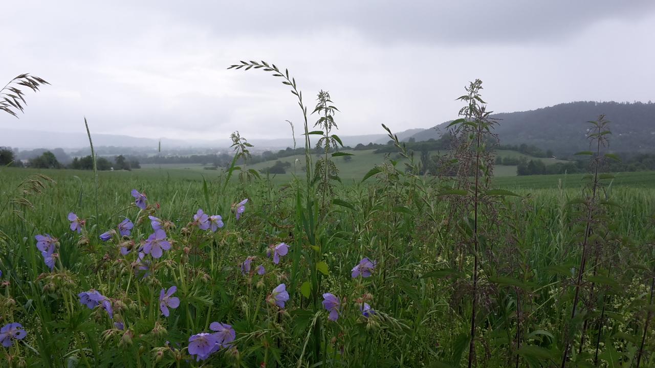 Schöne Aussicht, auch bei Regen